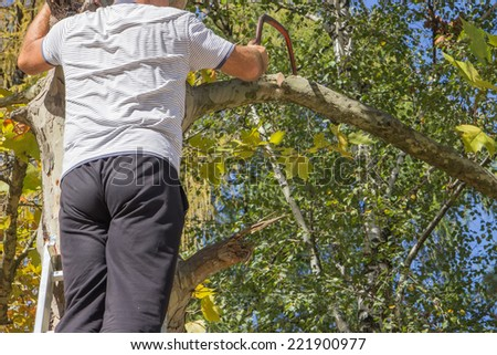 Pruning dead tree branches with a hand saw - stock photo