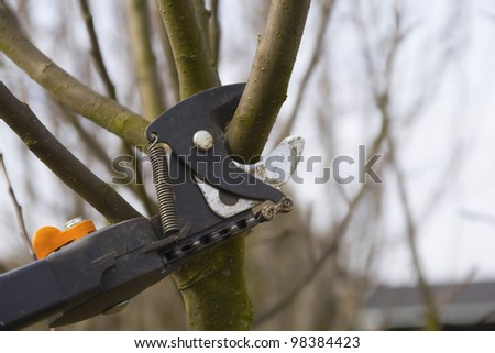 Pruning fruit trees by pruning shears. Detailed view of shears. Horizontally. - stock photo