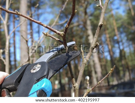 Pruning shears trees. Formation of tree crown. Spring works in the garden. - stock photo