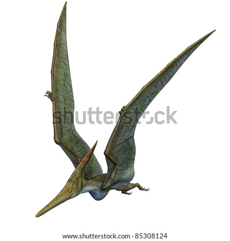 Pteranodon Dinosaur wings up flying. From the Late Cretaceous geological period of North America in present day Kansas, Alabama, Nebraska, Wyoming, and South Dakota, one of the largest pterosaur. - stock photo