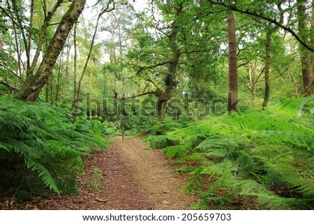 public footpath in the woodlands, magical scenery with sun rays - stock photo
