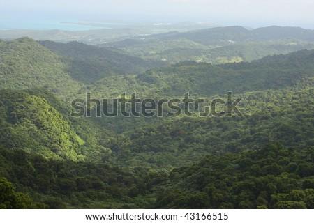 puerto rico, el yunque - stock photo