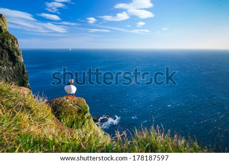 Puffin standing on a grassy cliff, sea as background, Latrabjarg north Iceland - stock photo