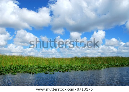 Puffy white clouds in a blue sky over plants, reeds and water of the Florida Everglades. - stock photo