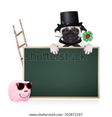 pug dog as chimney sweeper with four leaf clover  behind blackboard or placard,  celebrating and toasting for new years eve, isolated on white background - stock photo