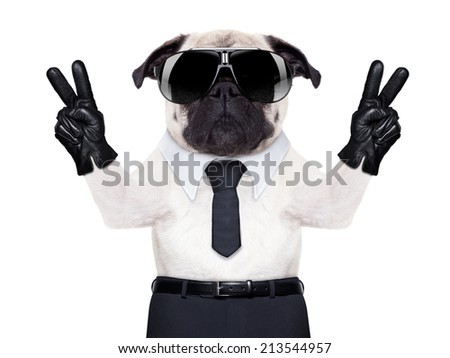 pug dog looking so fancy with victory or peace fingers, wearing cool  black sunglasses - stock photo