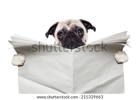 pug dog reading a blank white empty newspaper isolated on white background - stock photo