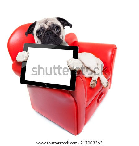 pug dog sitting on red sofa relaxing and resting while holding a tablet pc computer screen or digital display , isolated on white background - stock photo