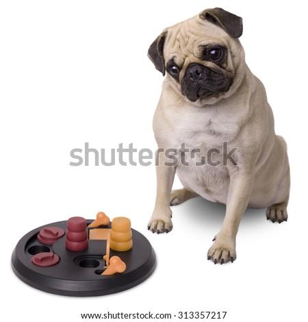 Pug dog with brain game isolated on white background - stock photo
