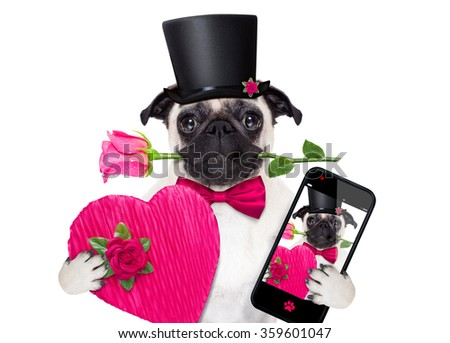 pug  dog with valentines rose in mouth  holding a gift or present and taking a selfie with smartphone isolated on white background - stock photo