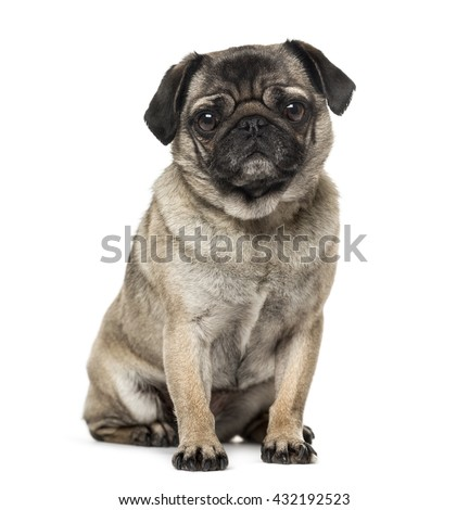 Pug looking at the camera, sitting and isolated on white - stock photo