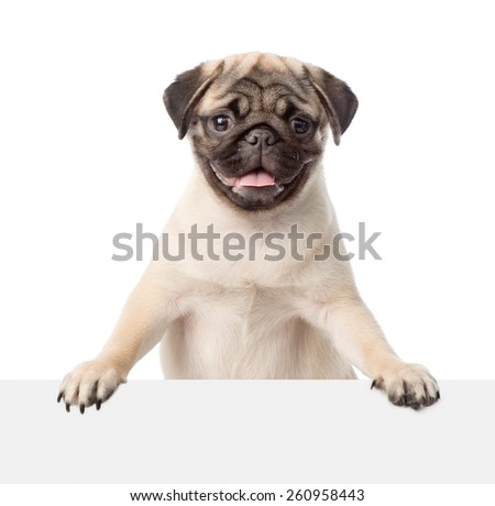 Pug puppy peeking from behind empty board. isolated on white background - stock photo