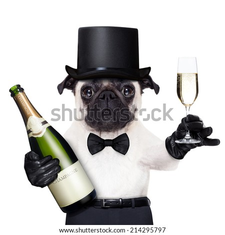 pug with  a champagne glass  and a bottle on the other side toasting for new years eve - stock photo