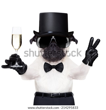 pug with a  champagne glass and victory or peace fingers toasting for new year wearing a black hat - stock photo