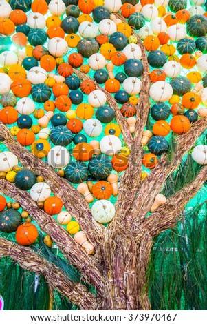 Pumpkin Background, Thailand - stock photo