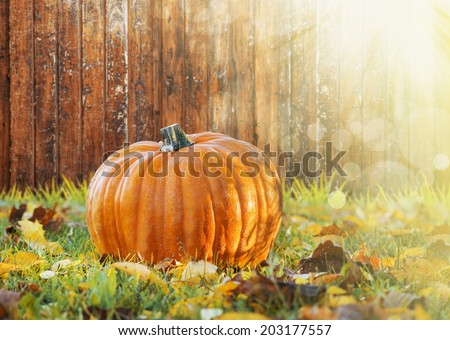 pumpkin in  grass with autumn foliage on background of fall garden - stock photo