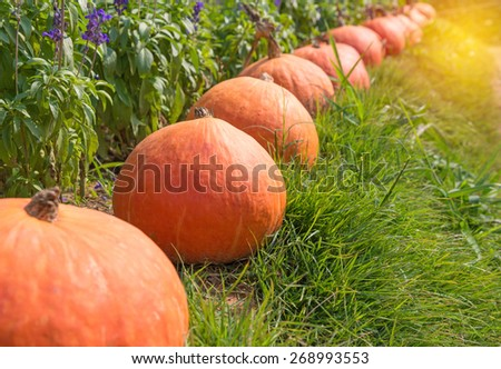 pumpkin on green grass with flower background. - stock photo