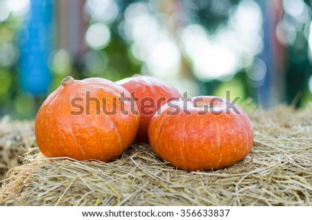 Pumpkin on the straw - stock photo