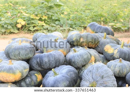 Pumpkin pile. - stock photo