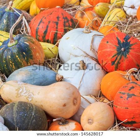 Pumpkin variety - stock photo