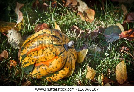 pumpkins and autumn foliage - stock photo