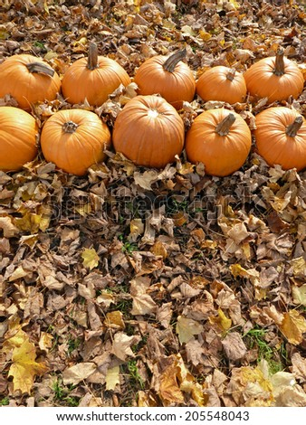 Pumpkins and Autumn Leaves - stock photo