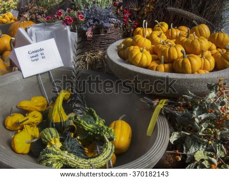 Pumpkins and gourds at a florist's shop. Small pumpkins and gourds in colorful pots for sale at a flower shop. - stock photo