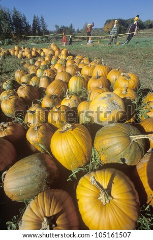 Pumpkins and scarecrows in VT - stock photo