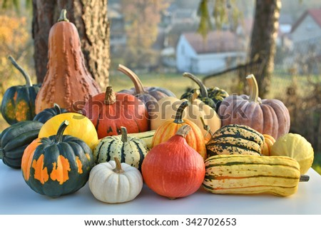 Pumpkins and squashes autumn collection - stock photo