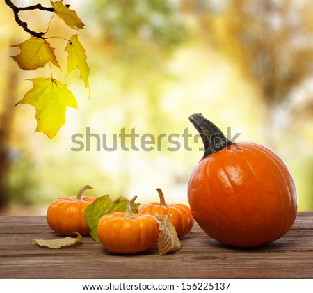 Pumpkins and squashes on rustic wooden boards with an shinning autumn backdrop - stock photo