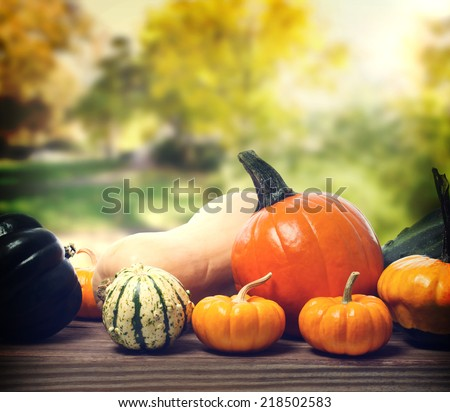 Pumpkins and squashes with a yellow trees background - stock photo