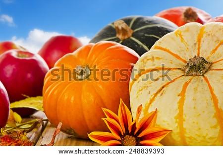Pumpkins, apples . Selective focus - stock photo