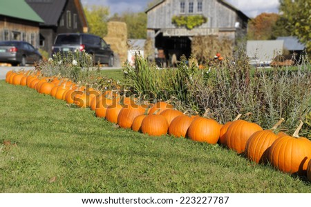 Pumpkins at farmer's market, Vermont - stock photo
