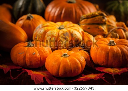 Pumpkins for Thanksgiving and Halloween - stock photo
