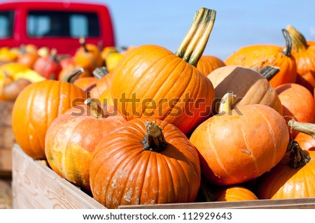 Pumpkins in the wooden box preparing for sale - stock photo