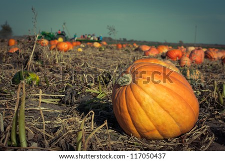Pumpkins on a field under a great cloudscape. Toned picture with a shallow DOF. - stock photo