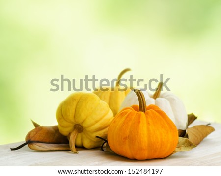Pumpkins on green natural background. - stock photo