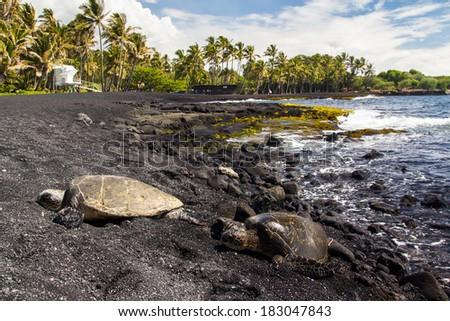 Punaluu black sand beach with turtles - stock photo
