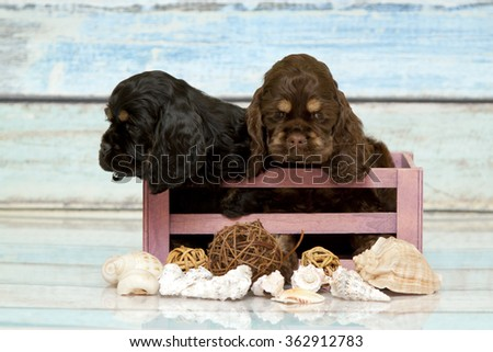 Puppies Cocker spaniel in a box - stock photo
