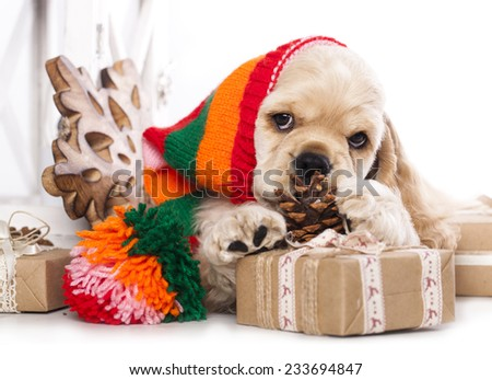 puppy American Cocker Spaniel and  Vintage gift box - stock photo