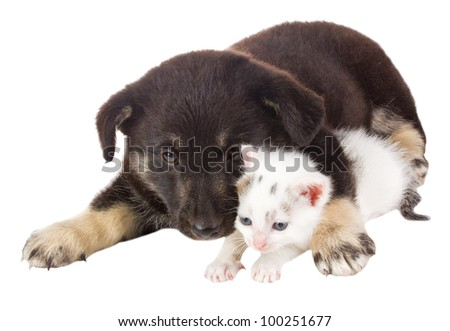 puppy and cat - stock photo