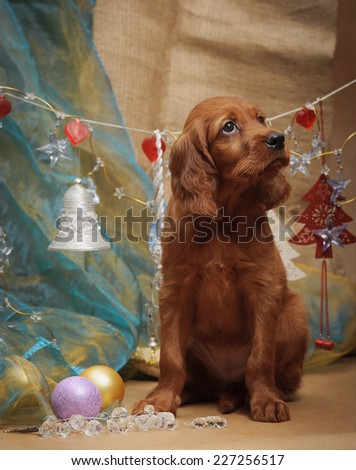 Puppy and Christmas decorations. Vertical. Studio. - stock photo