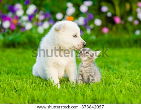 Puppy and kitten kissing on the green lawn - stock photo