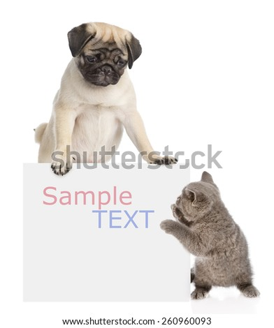 Puppy and kitten peeking from behind empty board. isolated on white background - stock photo