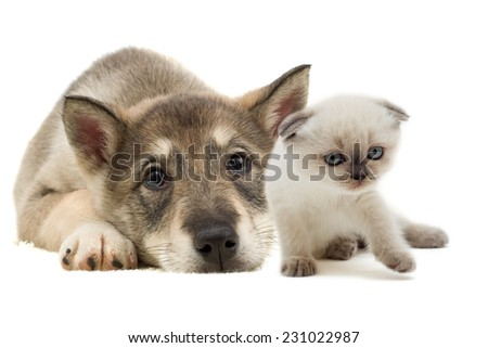 Puppy and kitten puppy lying - stock photo