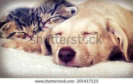 puppy and kittens sleeping - stock photo