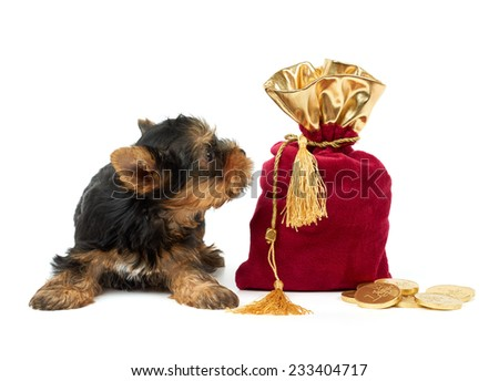 Puppy and sack with euro coins on white - stock photo