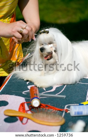 Puppy at pet stylist - stock photo