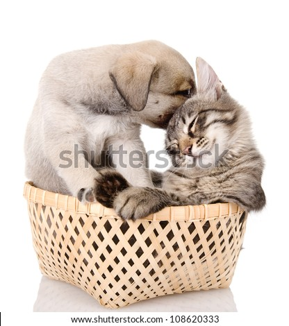 puppy caresses a kitten. isolated on white background - stock photo