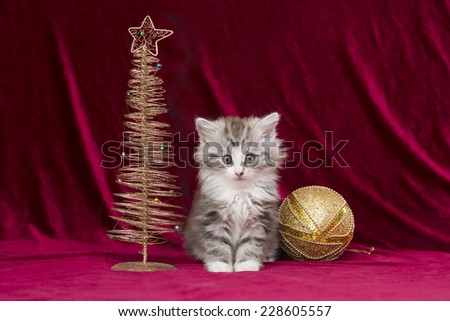 puppy cat with a christmas tree - stock photo